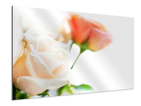 Aluminiumbild Rosenperspektive