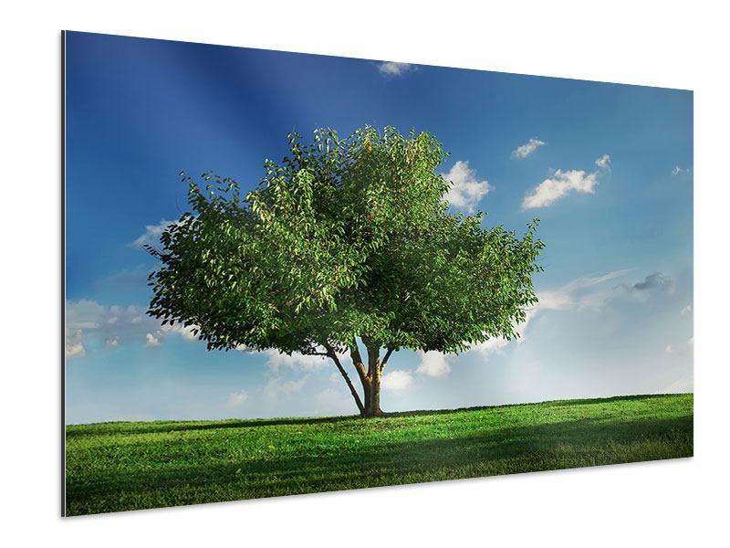 Aluminiumbild Baum im Grün