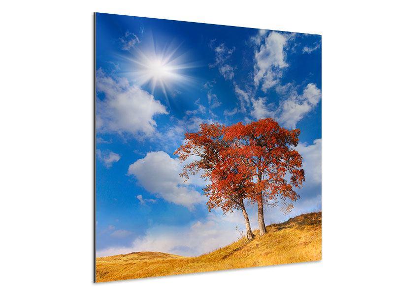 Aluminiumbild Der Herbstbaum