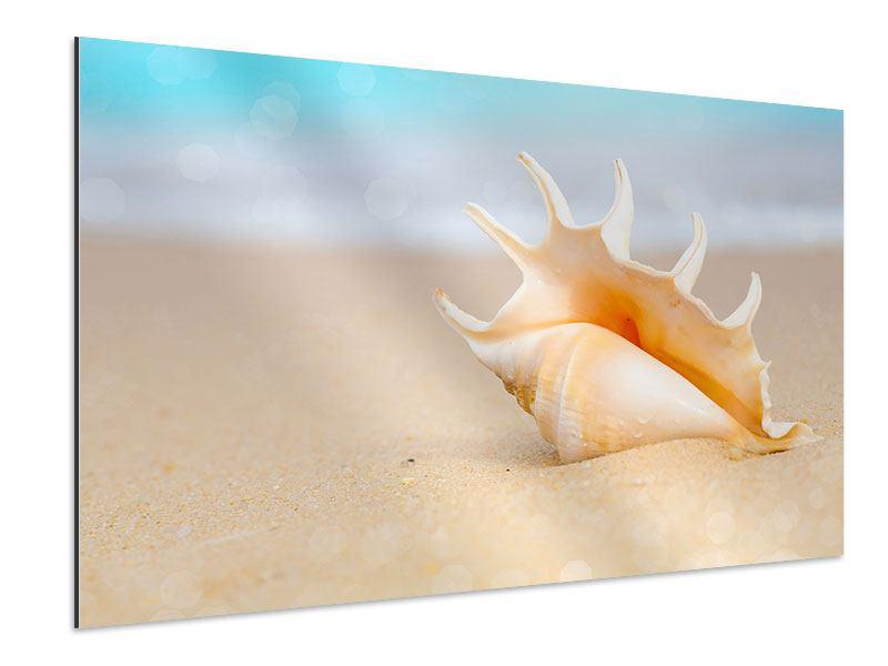 Aluminiumbild Die Muschel am Strand