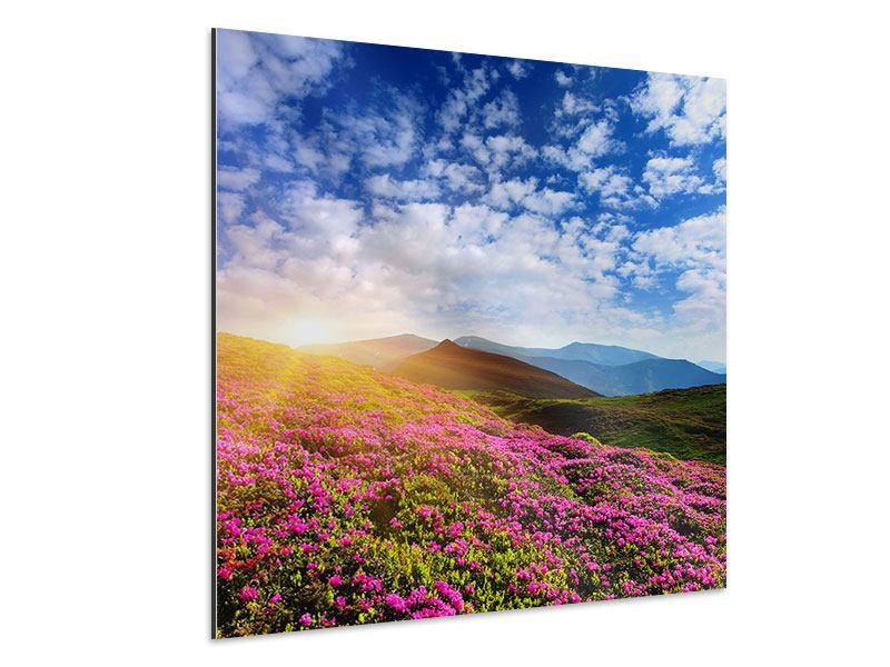 Aluminiumbild Blumige Berglandschaft