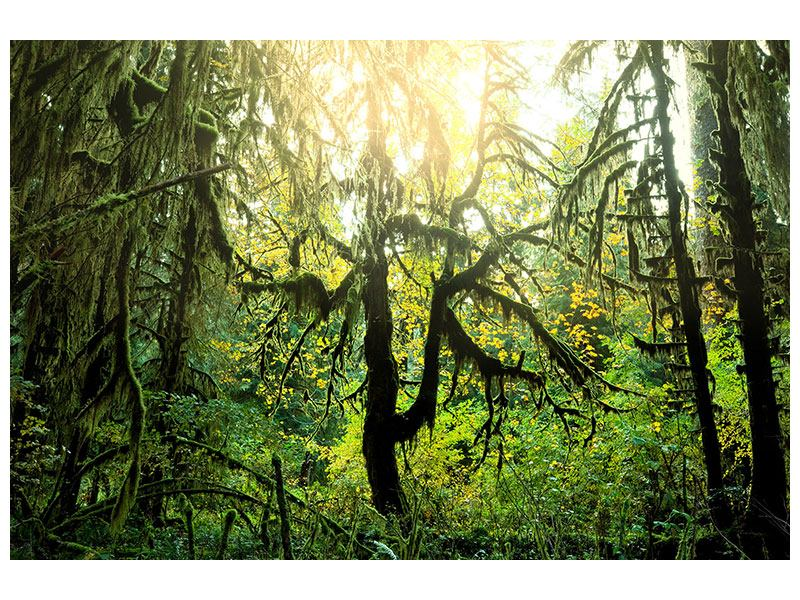 Aluminiumbild Verträumter Wald