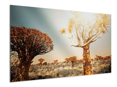 Aluminiumbild Afrikanische Landschaft