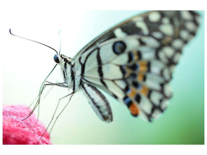 Aluminiumbild Schmetterling XXL