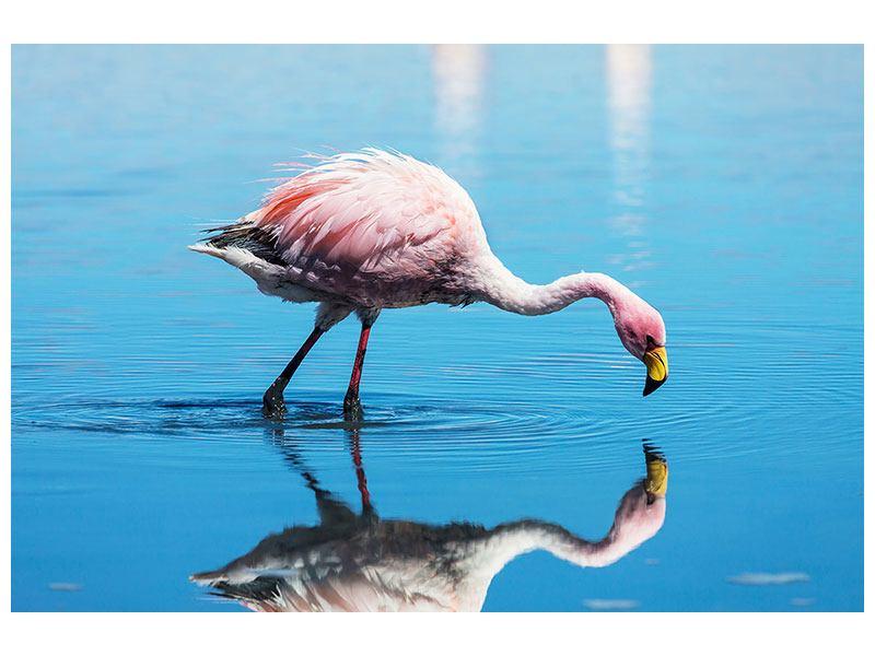 Aluminiumbild Der Flamingo