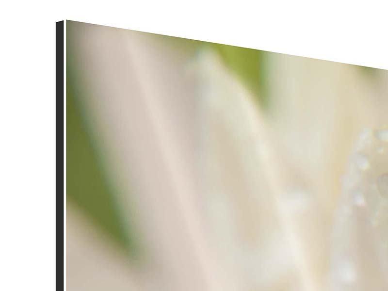Aluminiumbild Close Up Seerose
