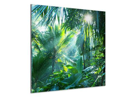 Aluminiumbild Im Tropenwald