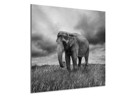 Aluminiumbild Elefant