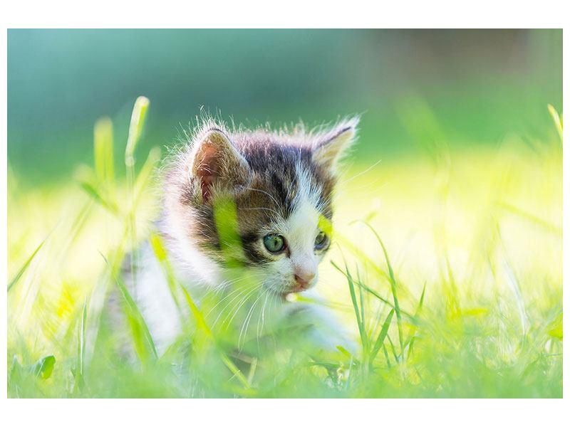 Aluminiumbild Kitten