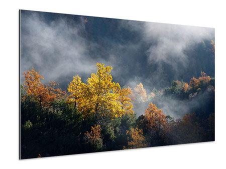 Aluminiumbild Mondscheinwald