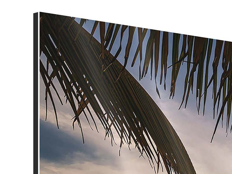 Aluminiumbild Strandpalme