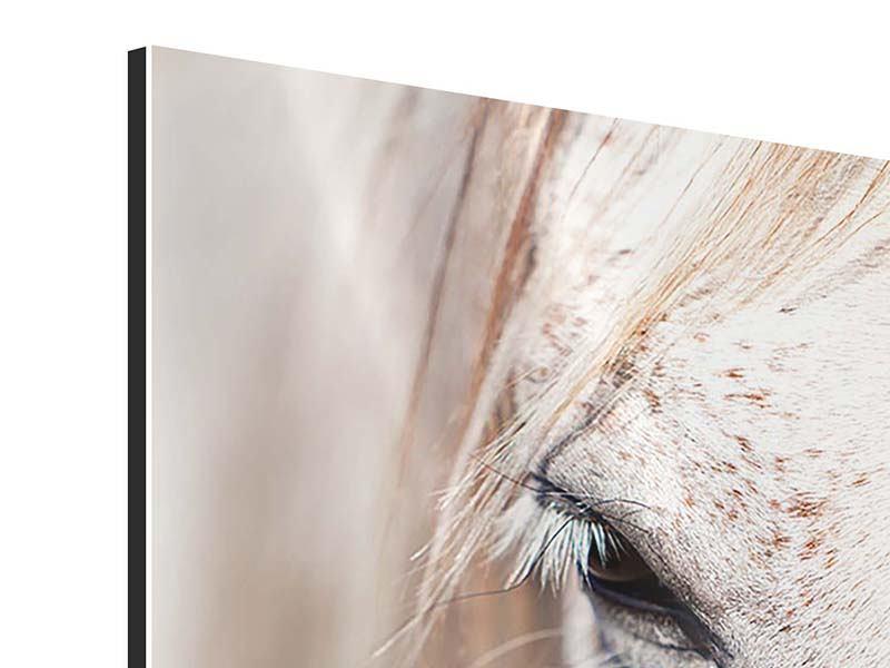 Aluminiumbild Der Blick des Vollblut-Schimmels