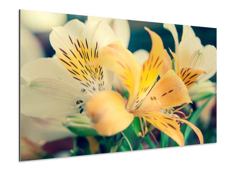 Aluminiumbild Tigerlilien