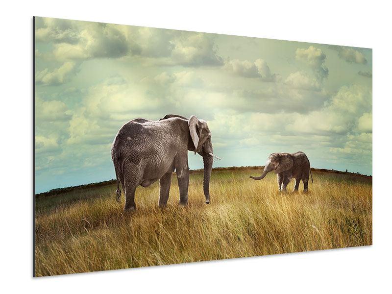 Aluminiumbild Elefanten und Feng Shui