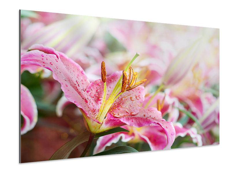 Aluminiumbild Lilien im Tau