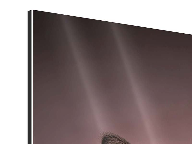 Aluminiumbild Elegante Samtpfoten