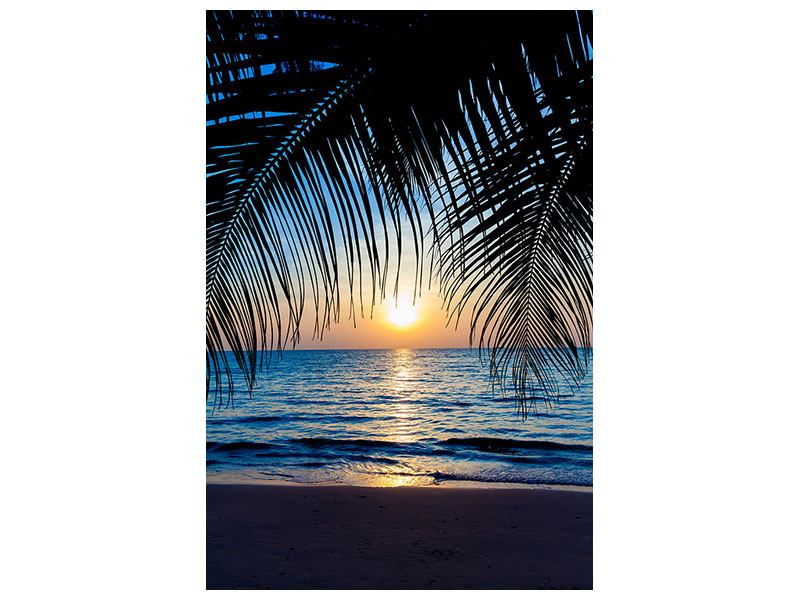 Aluminiumbild Durch die Palme