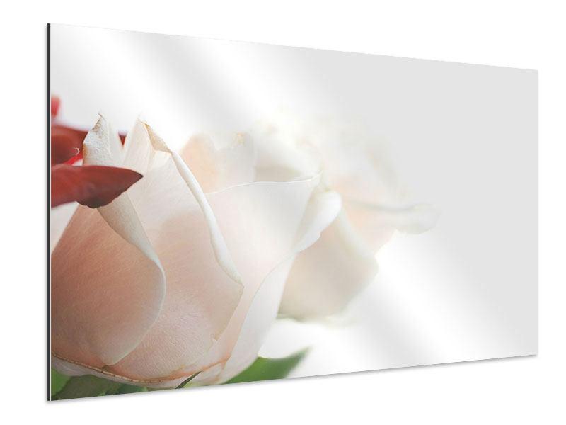 Aluminiumbild Herrliche Rosen