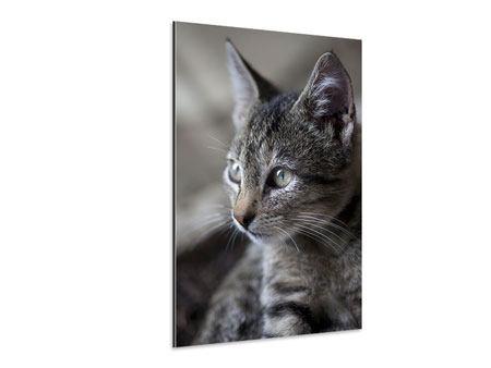 Aluminiumbild Tigerkatze