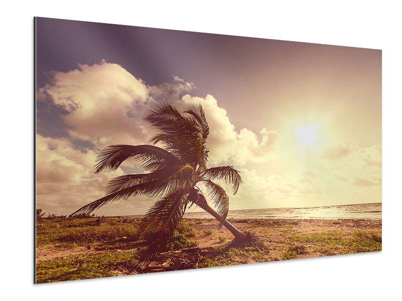Aluminiumbild Die schiefe Palme