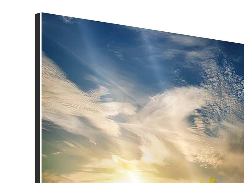 Aluminiumbild Sonnenblumen im Sonnenuntergang