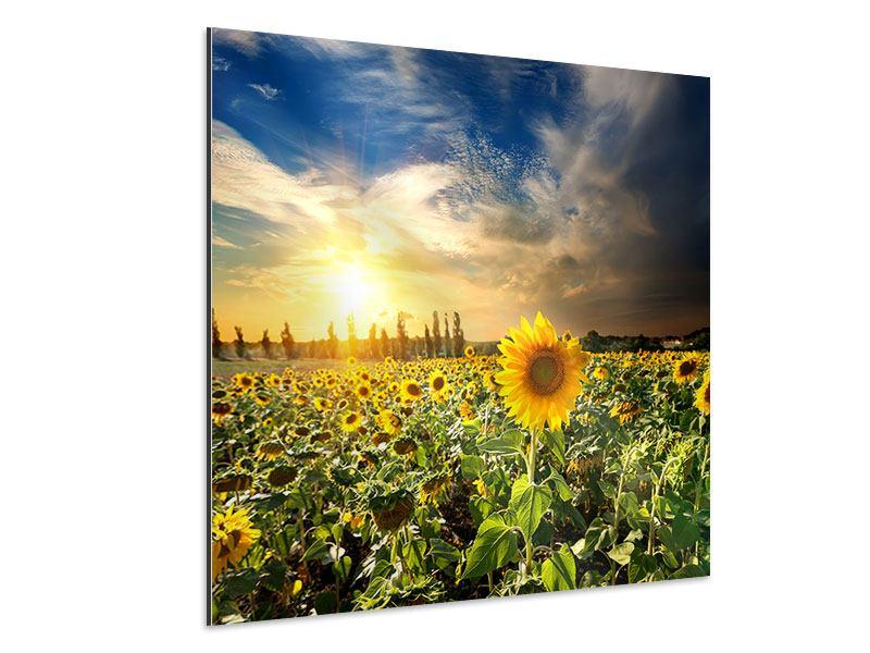 Aluminiumbild Sunny Flowers