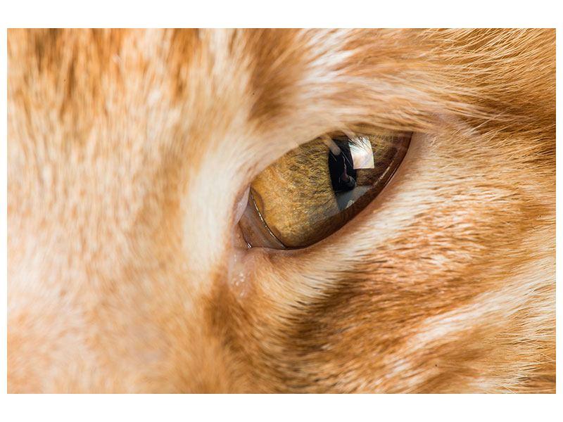 Aluminiumbild Close Up Katze