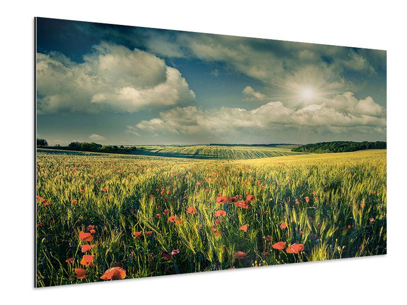 Aluminiumbild Der Mohn im Weizenfeld