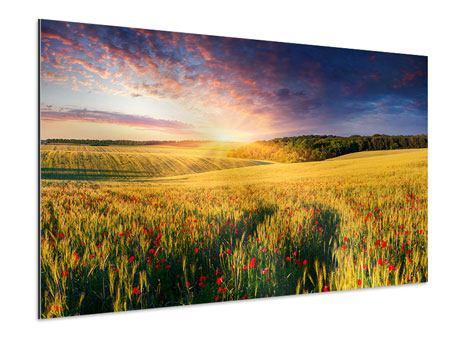 Aluminiumbild Ein Blumenfeld bei Sonnenaufgang