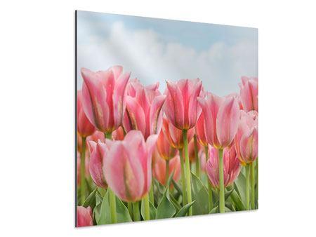 Aluminiumbild Zarte Tulpen
