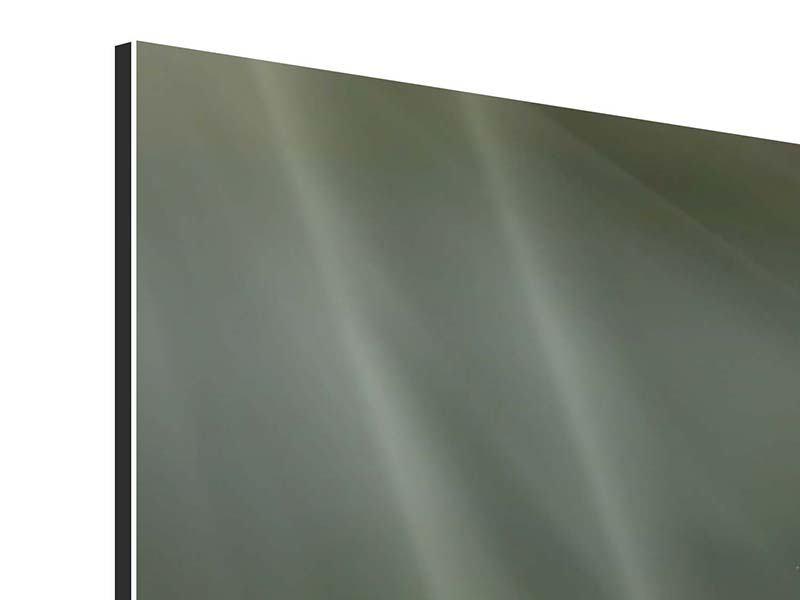 Aluminiumbild XXL Seerose in Pink