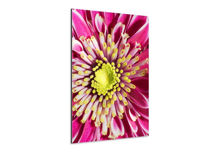 Aluminiumbild Majestätische Lotus