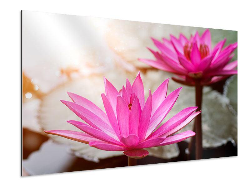 Aluminiumbild Lotus-Duo
