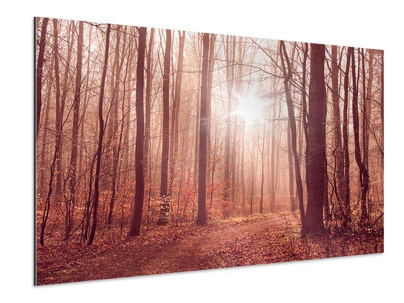 Aluminiumbild Sonnenuntergang im Herbstwald