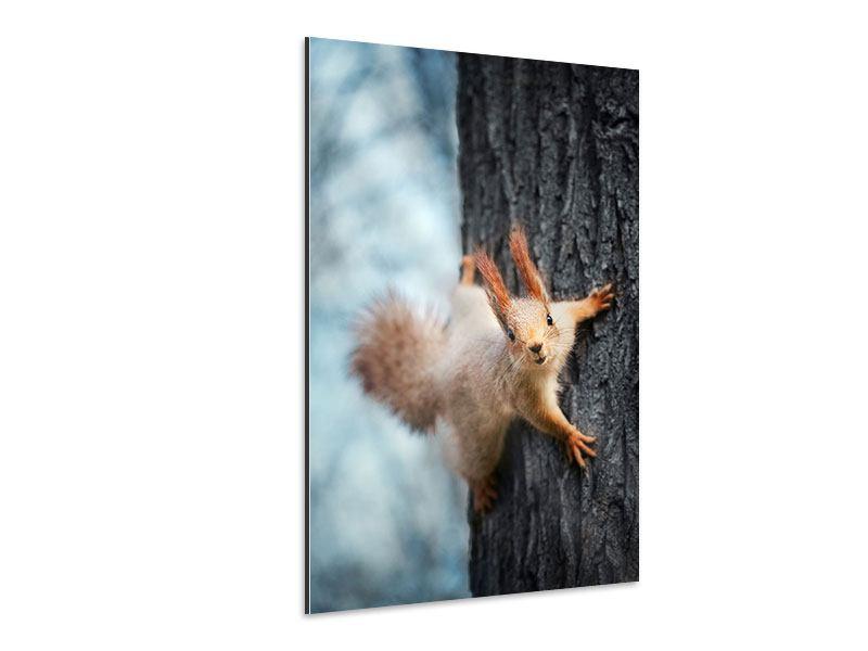 Aluminiumbild Das Eichhörnchen