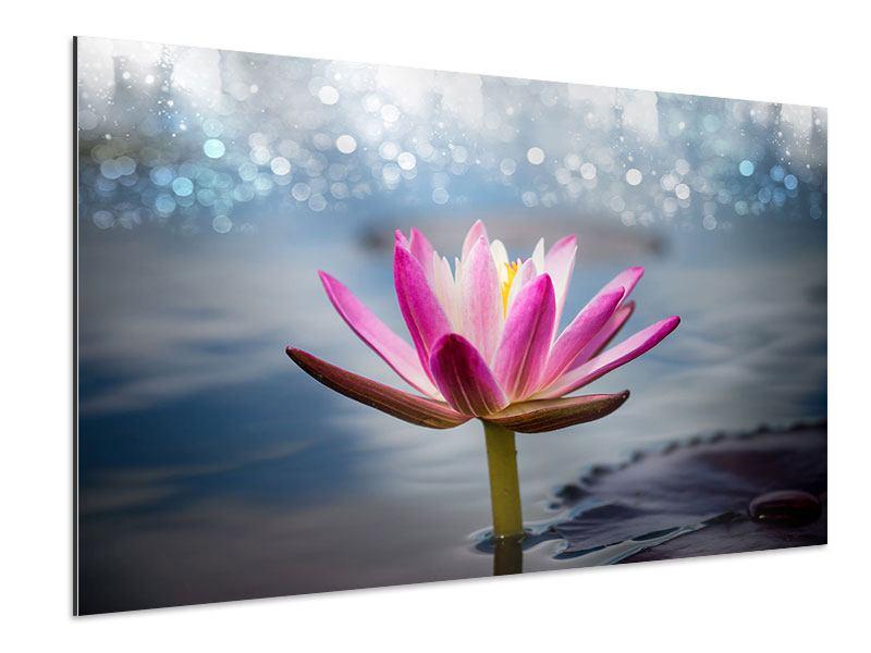 Aluminiumbild Lotus im Morgentau