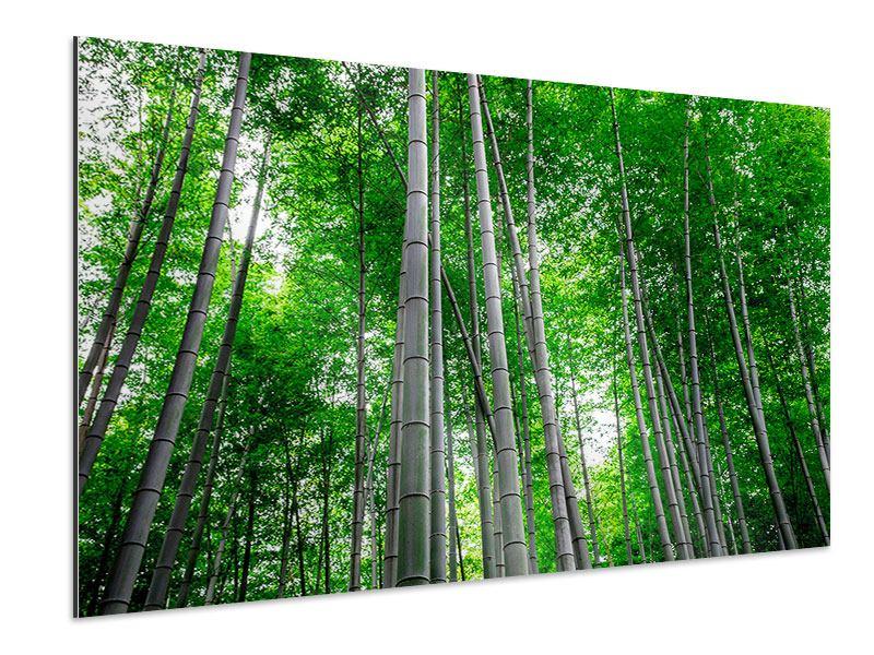 Aluminiumbild Bambuswald