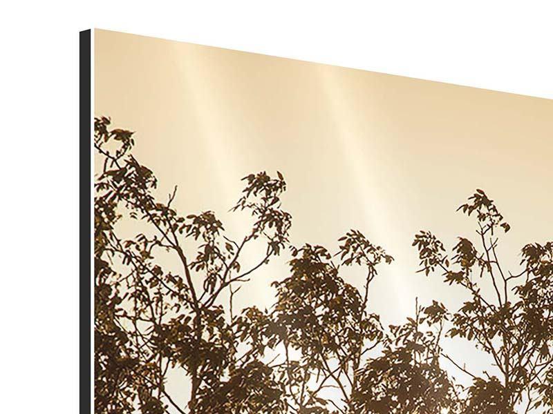 Aluminiumbild Das Licht im Baum