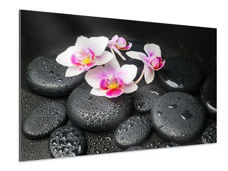 Aluminiumbild Feng-Shui-Orchidee Zen