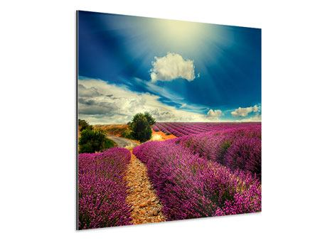 Aluminiumbild Das Lavendeltal