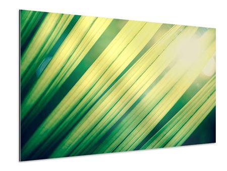 Aluminiumbild Beleuchtetes Palmblatt