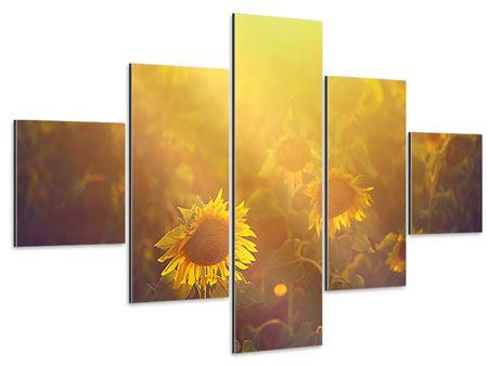 Aluminiumbild 5-teilig Sonnenblumen im goldenen Licht
