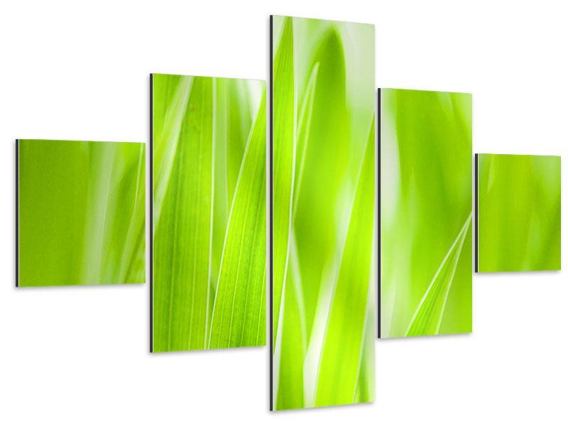 Aluminiumbild 5-teilig Gras XXL