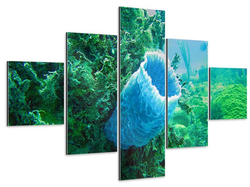Aluminiumbild 5-teilig Korallen