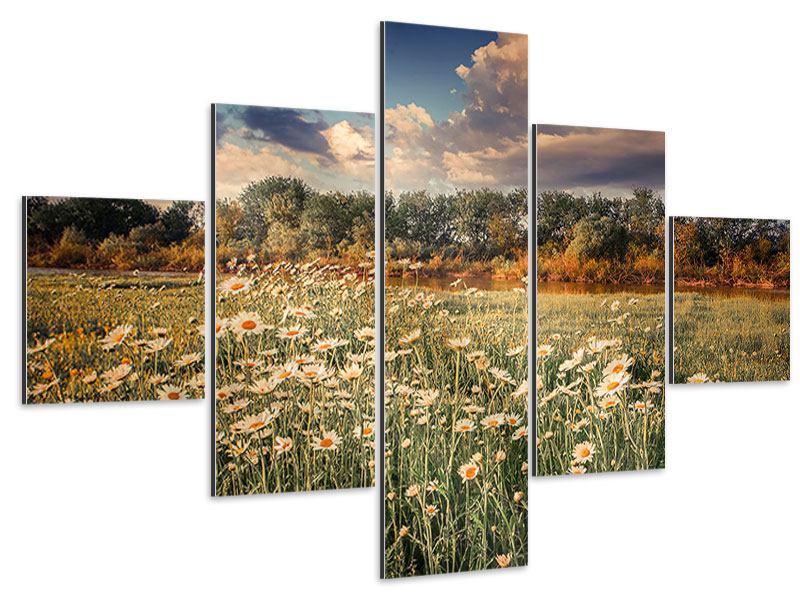 Aluminiumbild 5-teilig Die Wiesenmargerite am Fluss