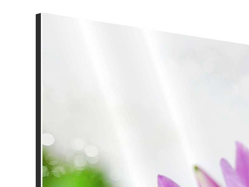 Aluminiumbild 5-teilig Die Lotus mit Biene