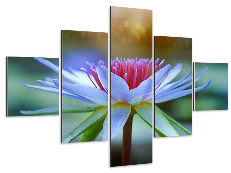 Aluminiumbild 5-teilig Pretty Lotus