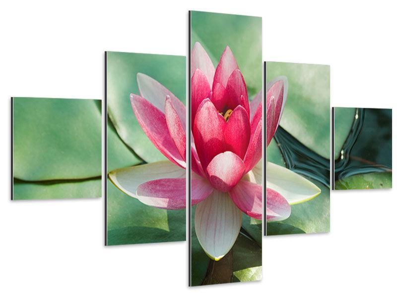 Aluminiumbild 5-teilig Der Frosch und das Lotusblatt