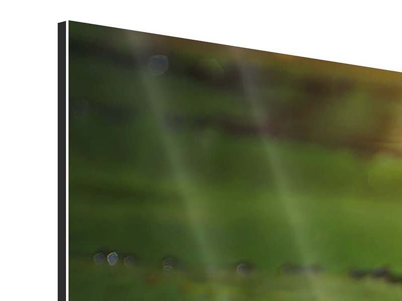 Aluminiumbild 5-teilig Lilienspiegelung