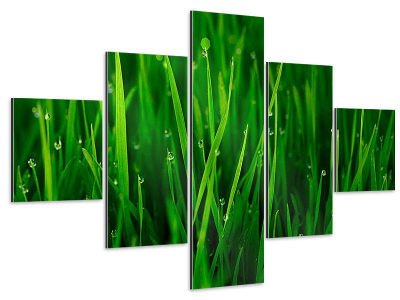 Aluminiumbild 5-teilig Gras mit Morgentau